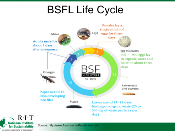 BSFL Life Cycle, Provided by Senior Design Team P17422