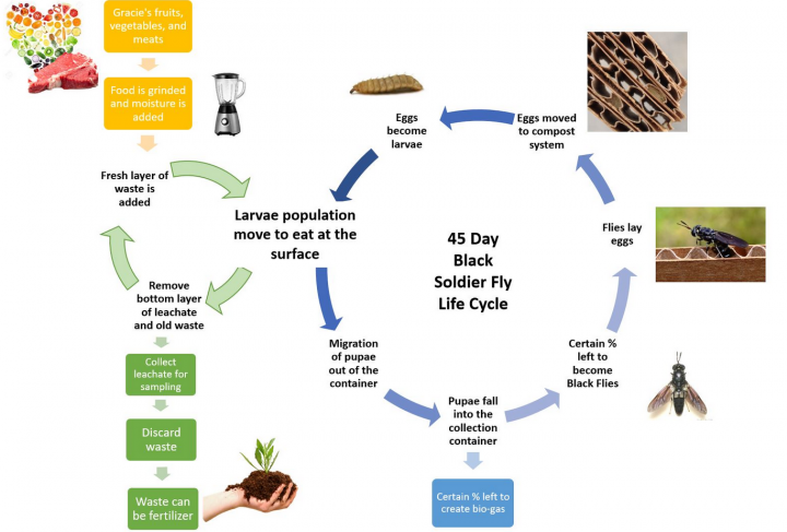 Diagram of Black Soldier Fly Composting (BSFC) Cycle